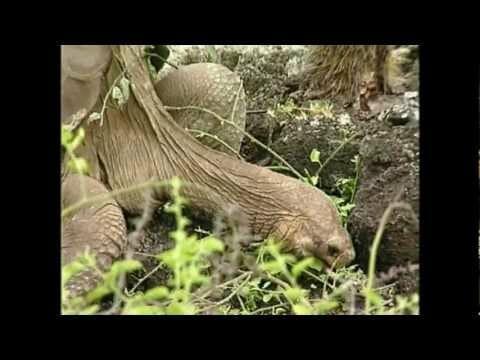 El Solitario George, Icono de la Biodiversidad, Muere en Galápagos